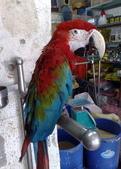 鳥:調整大小20081203518.jpg