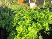 99-----菜花園:IMG_2765_調整大小