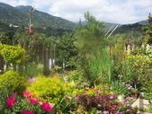 菜花園:調整大小103_1598.JPG