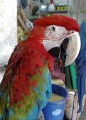 鳥:調整大小20081203519.jpg