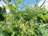 菜花園:調整大小103_1619.JPG