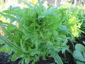 99-----菜花園:IMG_2759_調整大小