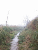 太平山翠峰湖山毛櫸步道:調整大小100_0773.JPG