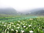 竹子湖:複製 -102_2365_調整大小.JPG