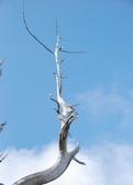 太平山翠峰湖:調整大小旋轉DSC_0365.JPG