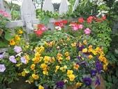 2011菜花園:IMG_8177.JPG