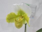 2011台北國際蘭展:IMG_6354_調整大小.JPG