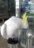 鳥:調整大小20081029142.jpg