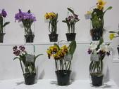 2011台北國際蘭展:IMG_6284_調整大小.JPG