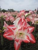 花博--春之花頌:IMG_5848.JPG
