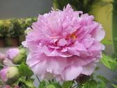 花博--春之花頌:IMG_7284_調整大小.JPG
