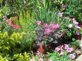 菜花園:調整大小103_1604.JPG