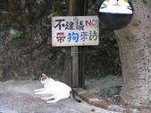 侯硐貓村:P1010184.JPG