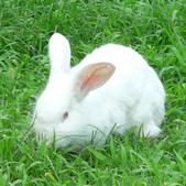 米小小兔:1126071267.jpg