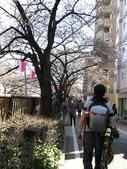 20150327目黑川賞櫻:IMG_5906.JPG