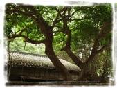 華光社區:R1042369.jpg