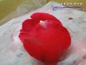 雙餡甜蜜Macaron--貝莉安特:DSC06805.JPG