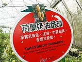 一二九竹風一日之這些是蕃茄---金勇DIY蕃茄農場:DSC06912.JPG