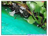2011秋旅--尋找『嘉』南平原上的童年『義』術--童年:P01.jpg