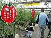 一二九竹風一日之這些是蕃茄---金勇DIY蕃茄農場:DSC06921.JPG