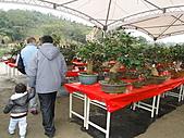 一二九竹風一日之偶然遇見的---客庄新春茶花季:DSC06770.JPG