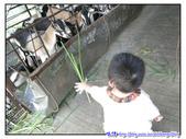 宜蘭行第九站--宜農牧羊場:P18.jpg