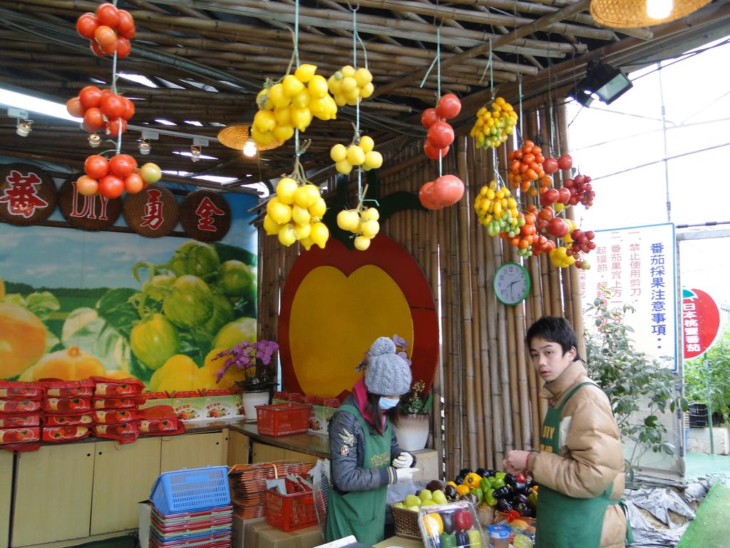 一二九竹風一日之這些是蕃茄---金勇DIY蕃茄農場:DSC06931.JPG