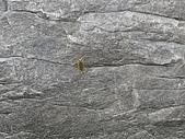金山銀山不如大家一起去爬山~:DSC02372.JPG