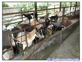 宜蘭行第九站--宜農牧羊場:P19.jpg