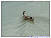 宜蘭行第五站--梅花湖:P12.jpg