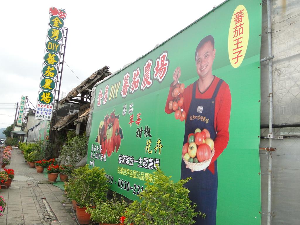 一二九竹風一日之這些是蕃茄---金勇DIY蕃茄農場:DSC06882.JPG