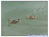 宜蘭行第五站--梅花湖:P15.jpg