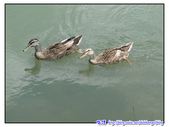 宜蘭行第五站--梅花湖:P16.jpg