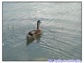 宜蘭行第五站--梅花湖:P17.jpg