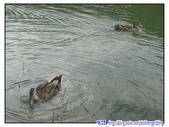 宜蘭行第五站--梅花湖:P19.jpg