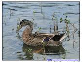 宜蘭行第五站--梅花湖:P20.jpg