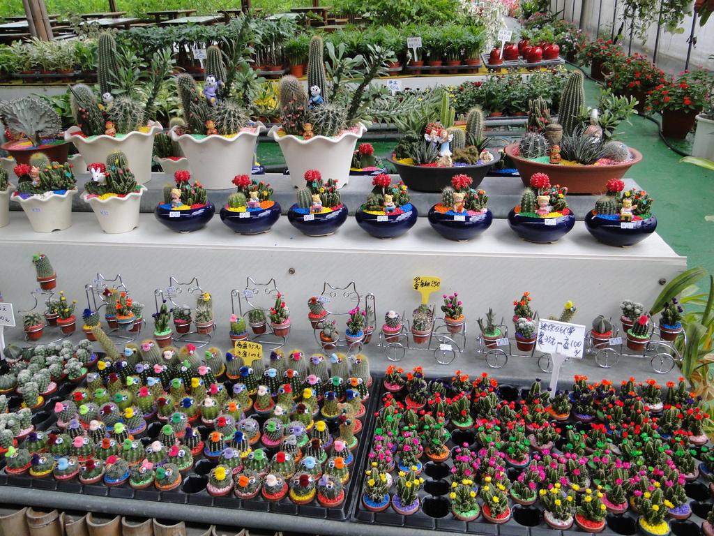 一二九竹風一日之這些是蕃茄---金勇DIY蕃茄農場:DSC06902.JPG