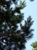 2013紐西蘭超LUCKY跳跳之旅-DAY3克倫威爾水果小鎮&南緯45度:P1140178.jpg
