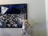 2013紐西蘭超LUCKY跳跳之旅-DAY3克倫威爾水果小鎮&南緯45度:P1140046.jpg