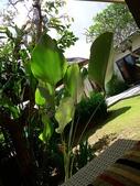 2012峇里島VILLA奢華之旅DAY3:P1100568.JPG