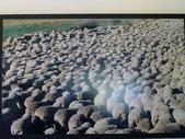 2013紐西蘭超LUCKY跳跳之旅-DAY3克倫威爾水果小鎮&南緯45度:P1140050.jpg