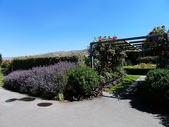 2013紐西蘭超LUCKY跳跳之旅-DAY3克倫威爾水果小鎮&南緯45度:P1140161.jpg