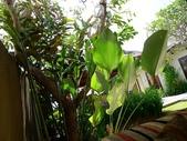 2012峇里島VILLA奢華之旅DAY3:P1100569.JPG