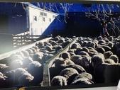 2013紐西蘭超LUCKY跳跳之旅-DAY3克倫威爾水果小鎮&南緯45度:P1140051.jpg