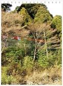 2010日本東京京都大阪自助DAY5-2保津川遊船:IMG_6242.jpg