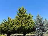 2013紐西蘭超LUCKY跳跳之旅-DAY3克倫威爾水果小鎮&南緯45度:P1140058.jpg