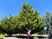 2013紐西蘭超LUCKY跳跳之旅-DAY3克倫威爾水果小鎮&南緯45度:P1140059.jpg