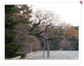 2010日本東京京都大阪自助DAY4-京都御所:IMG_5643.jpg
