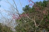 2013.0119新竹水田露營:P1120962.JPG