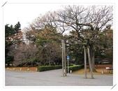 2010日本東京京都大阪自助DAY4-京都御所:IMG_5658.jpg